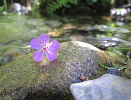 relax_flower_4